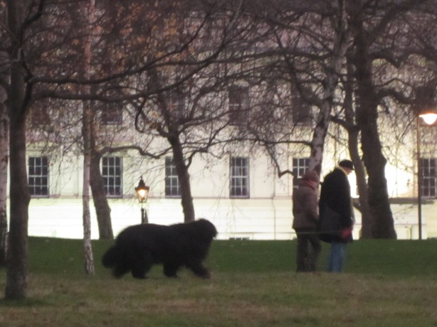 A couple taking what appears to be a large black bear for a walk...