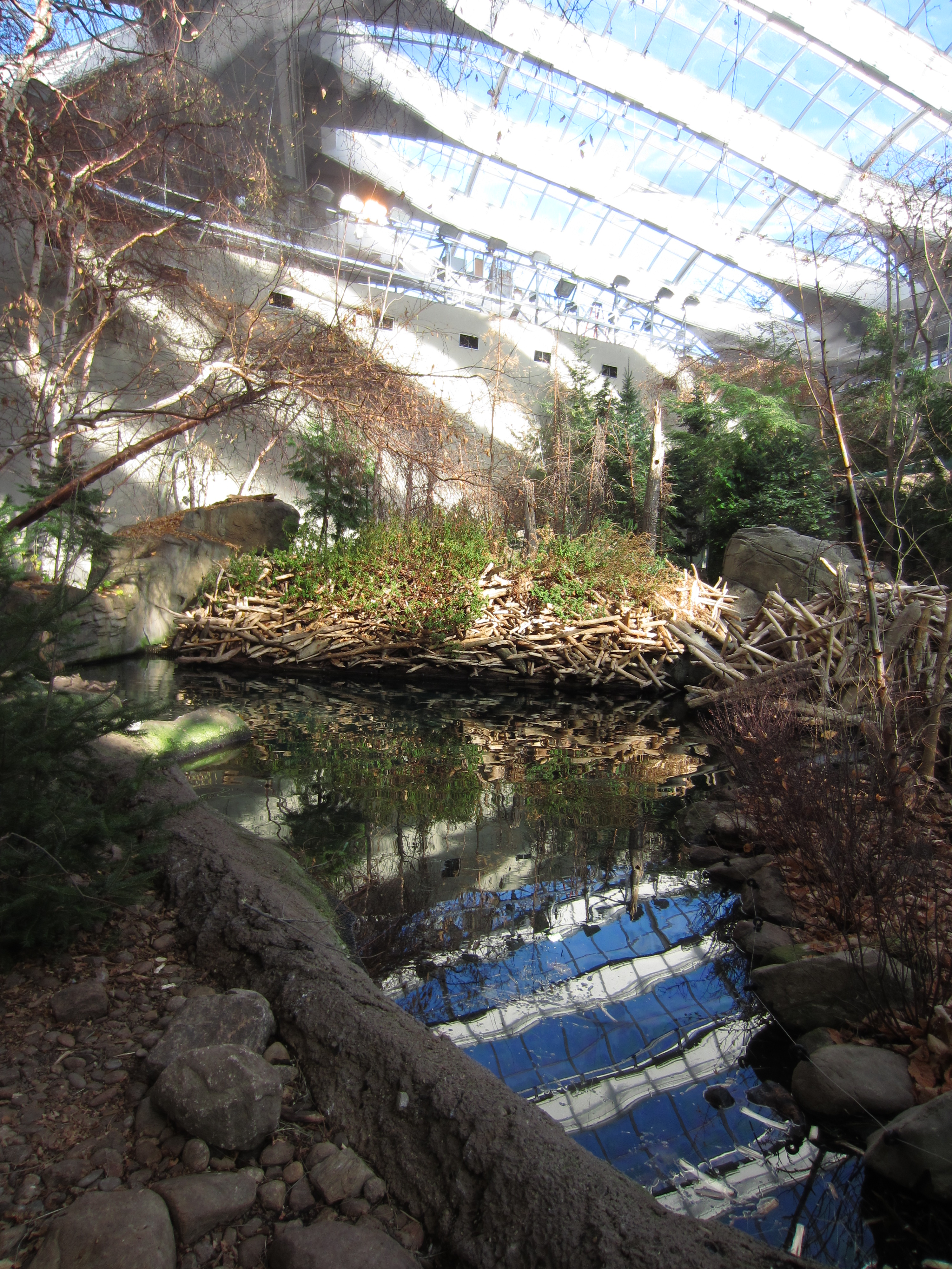 Indoor beaver dam, Laurentien maple forest, Biodome