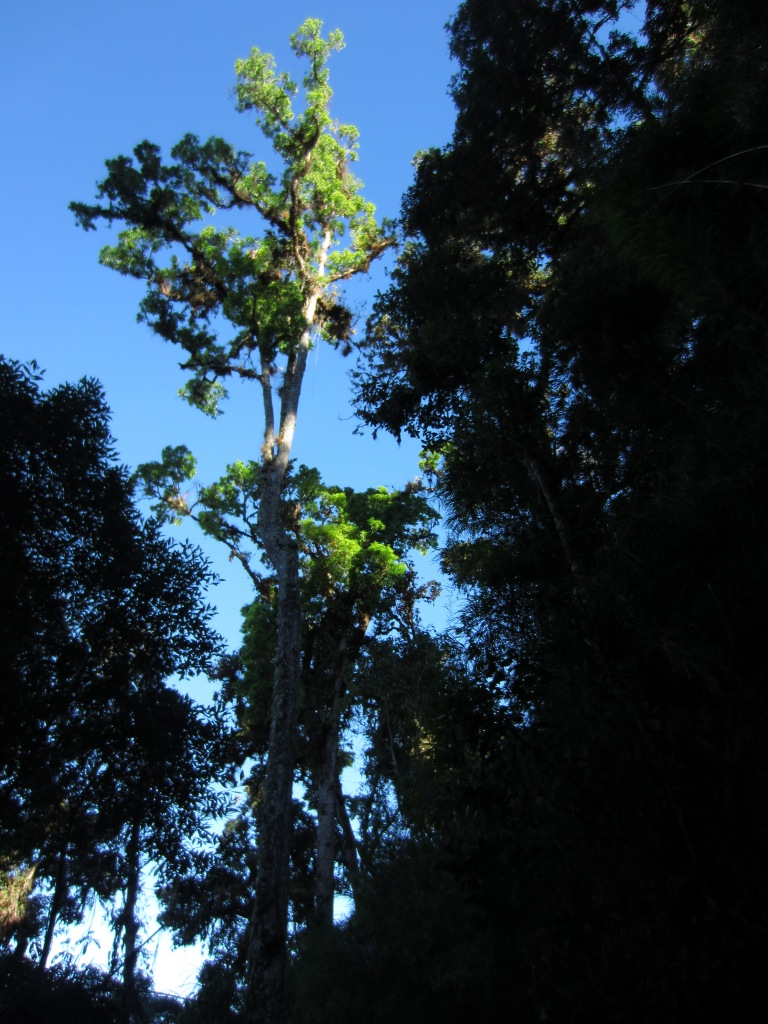 Giants in Chirripo national park