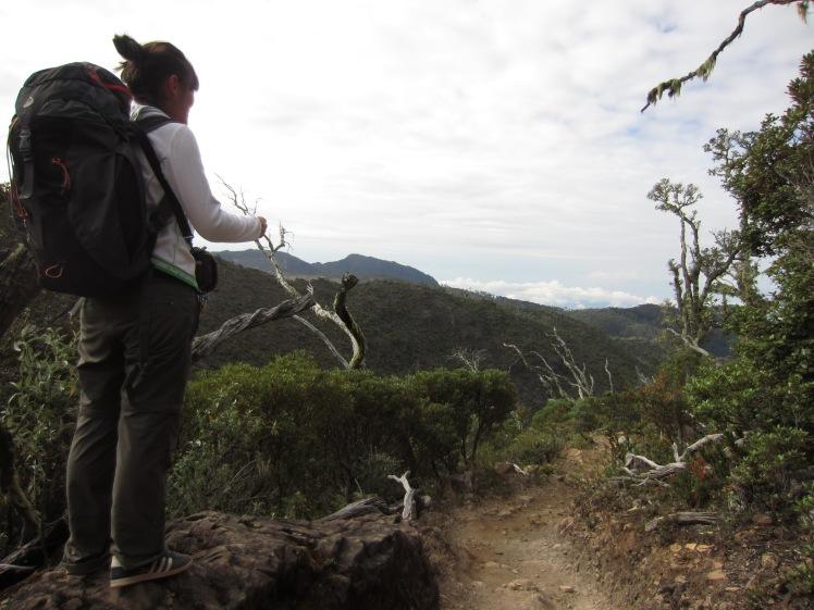Surveying the downhill climb...