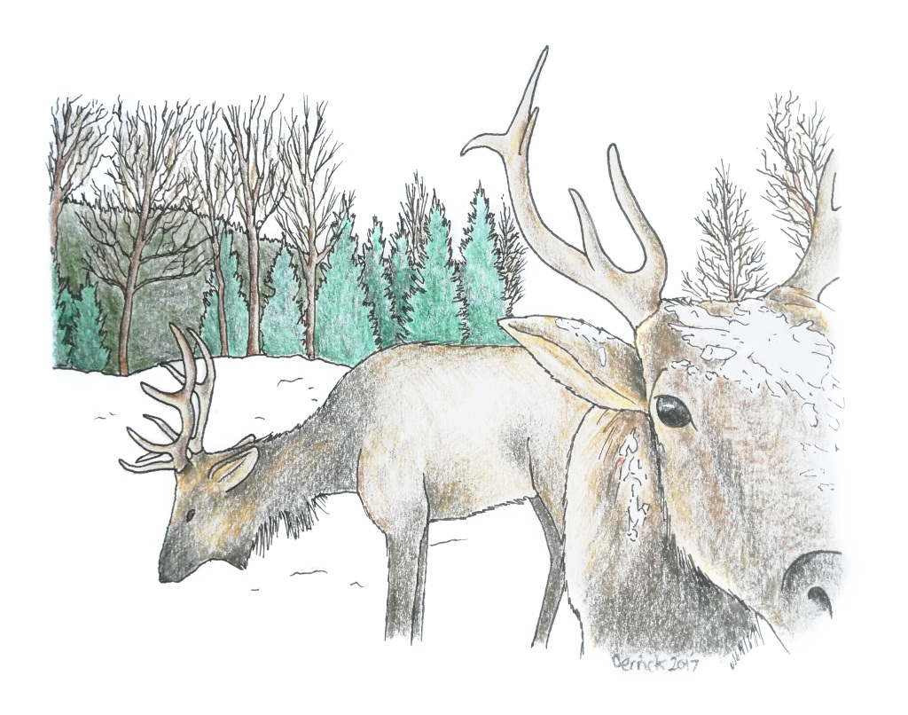 Sketch of canadian reindeer foraging for food in the snow