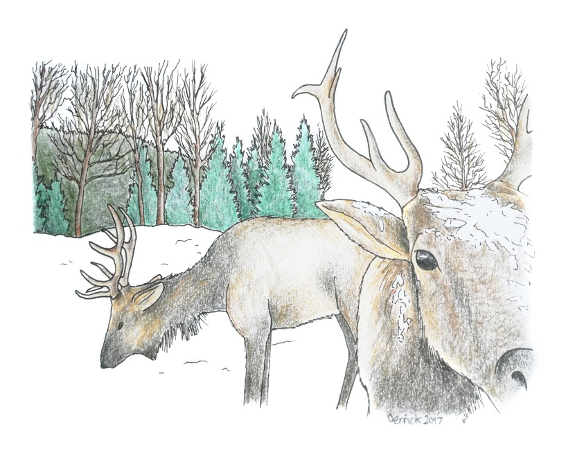 Parc Omega: an illustrated guide to a snow safari