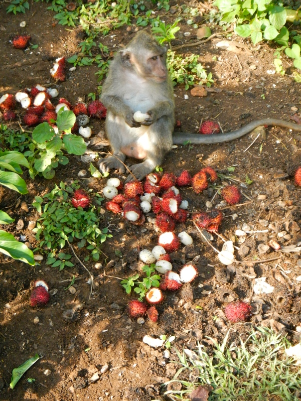 Gluttonous macaque