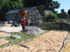 Seaweed farming on Nusa Penida