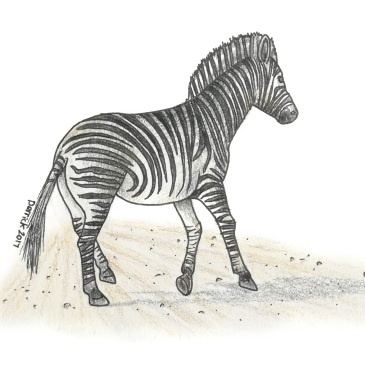 Drawing of an african zebra running across a road