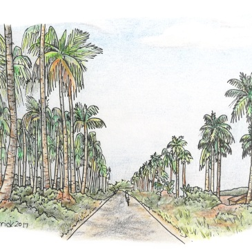 Sketch of palm tree groves in Mozambique