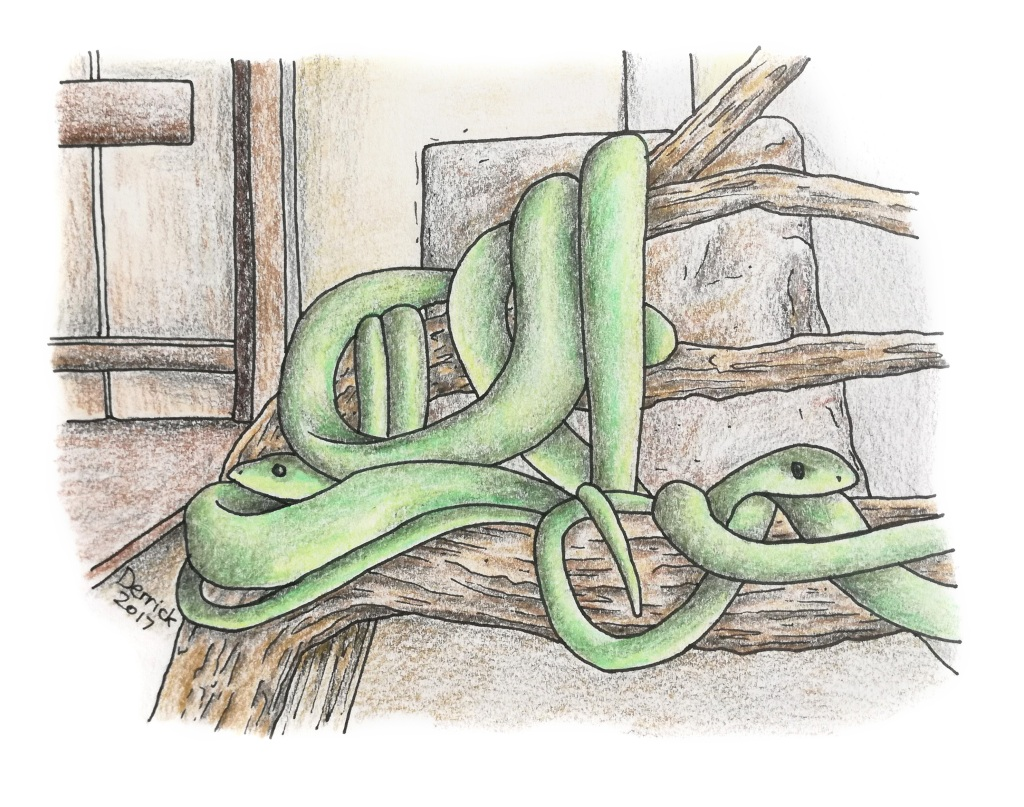 Drawing of green tree snakes in a tanzanian snake park