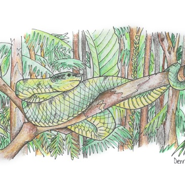 Drawing of a green tree snake in malaysia