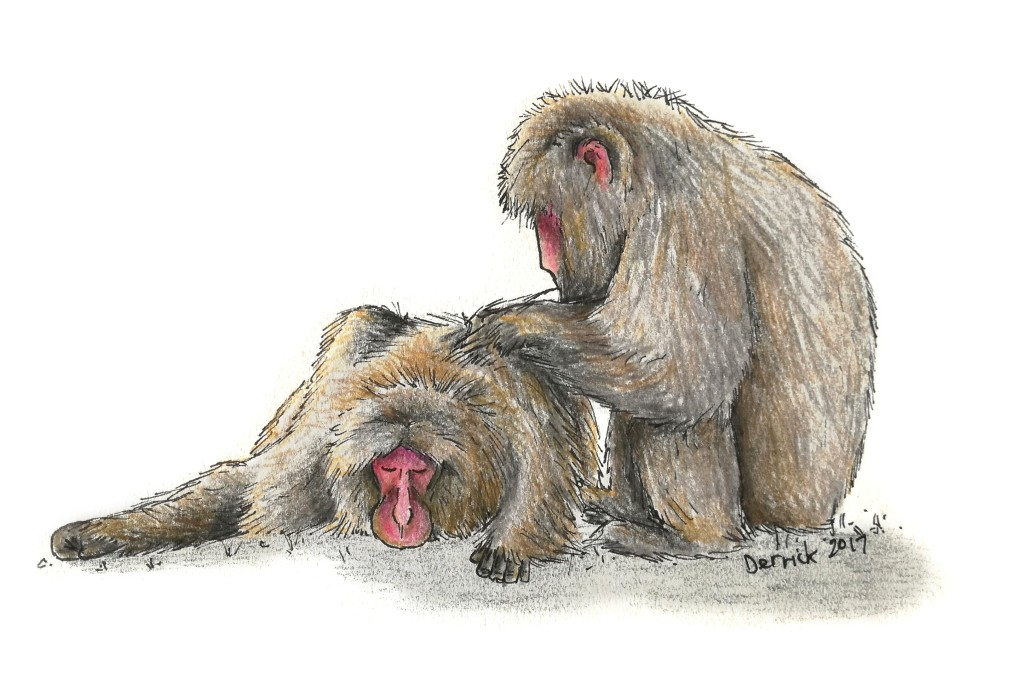 Sketch of Japanese snow monkeys grooming each other