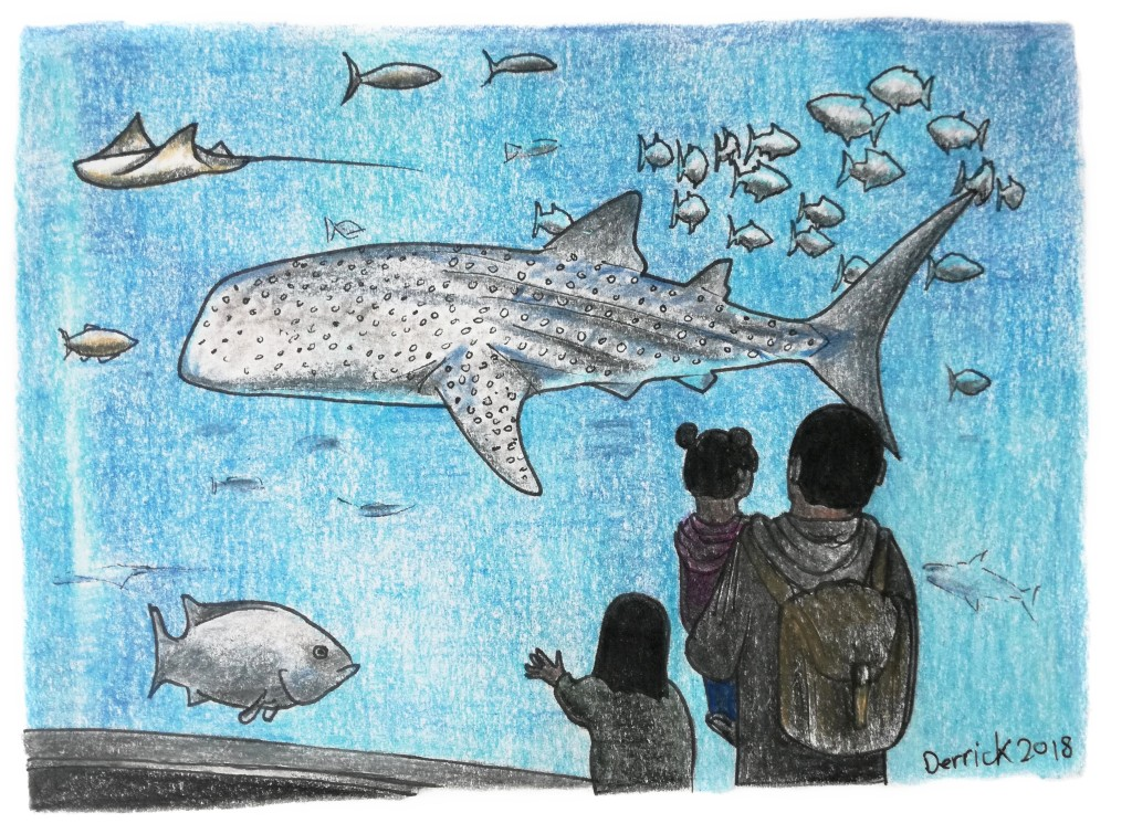 Sketch of a whale shark swimming in Osaka Kaiyukan aquarium