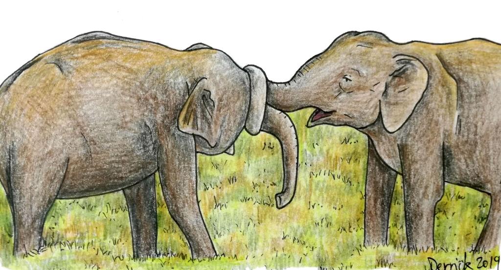Sketch of minneriya national park male elephants playing with their trunks