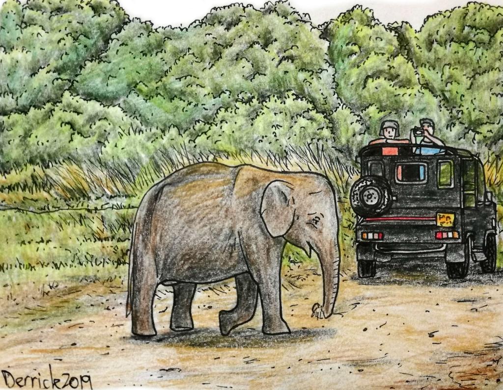 Sketch of an asian elephant on safari Sri Lanka minneriya national park