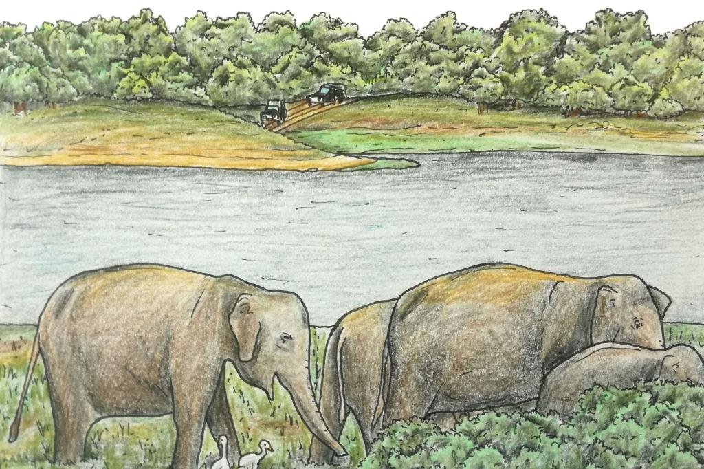 Sketch of asian elephants on a sri Lankan safari