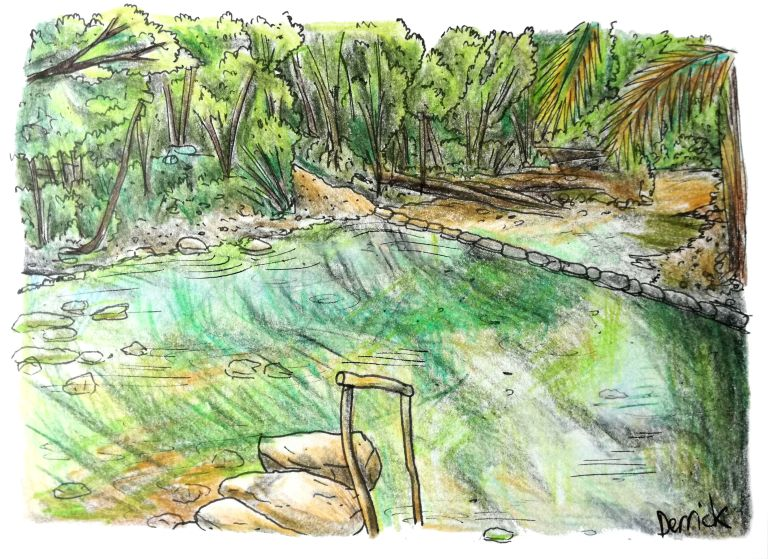 sketch of plants reflecting in a hot springs pool