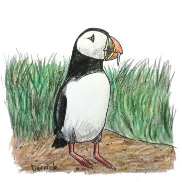 Sketch of a wild Icelandic puffin standing in the grass