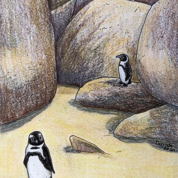 Boulders Beach Penguin colony illustration artwork