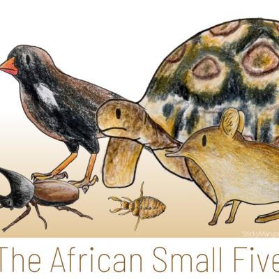 African small five animals leopard tortoise buffalo weaver elephant shrew antlion rhinoceros beetle