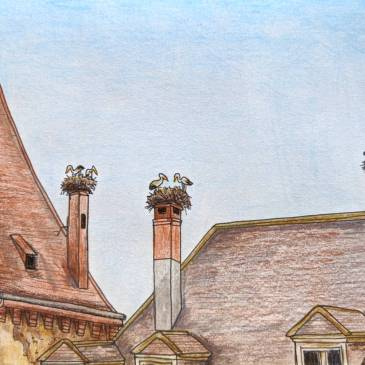 Sketch of stork nests on chimney platforms in northern France alsace region