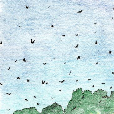 Drawing of Hyde Park sunset Sydney flying foxes bats