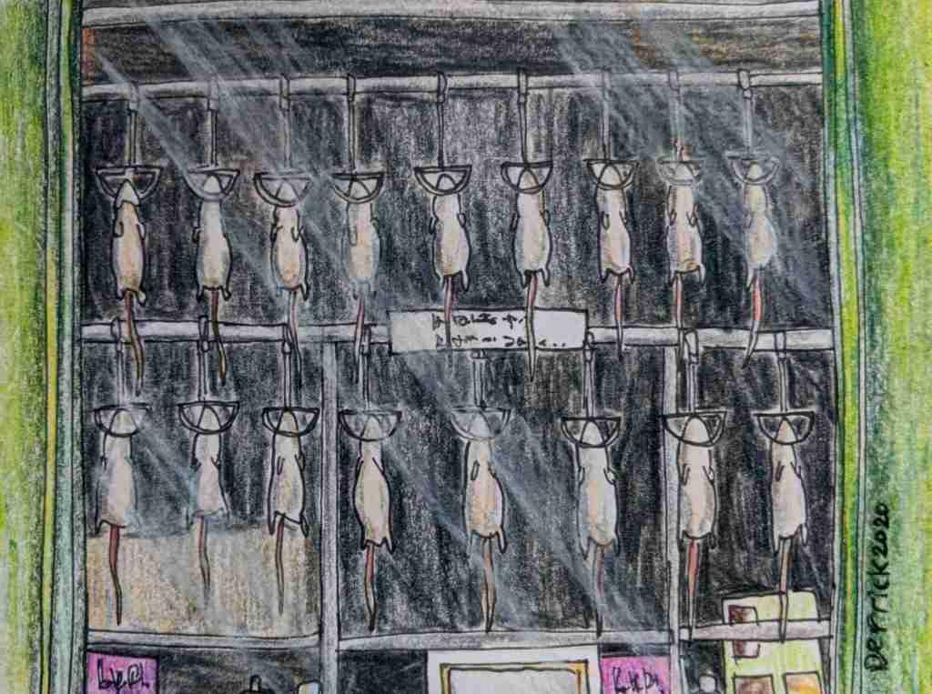 Sketch of dead rats hanging in the window of Julien Arouze Pest Control Paris