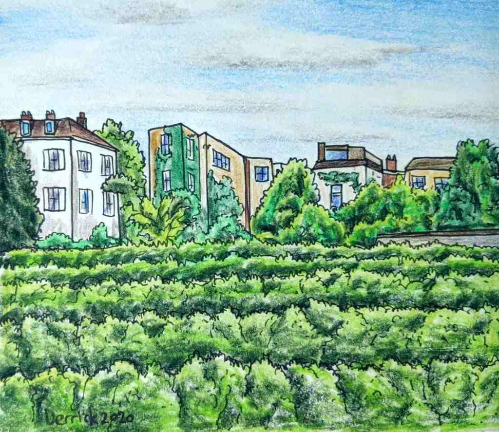 Drawing of Vignes du Clos Montmartre paris vineyard