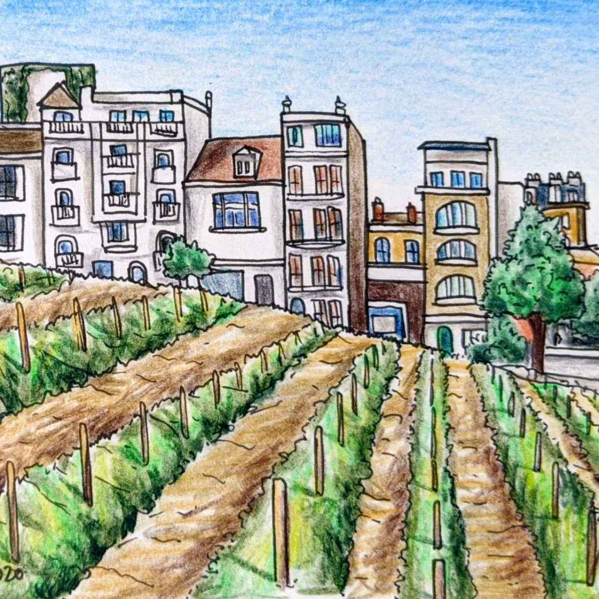 Drawing of a small vineyard in Montmartre Paris